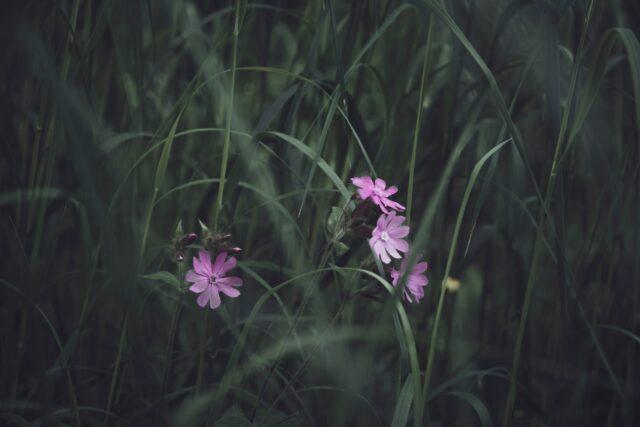 green-leafed purple-petaled flowering plant